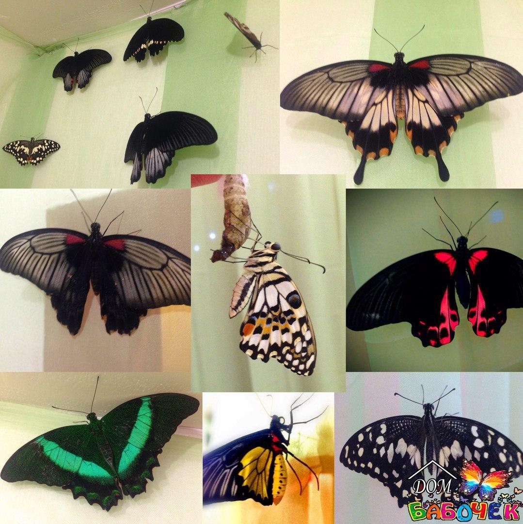 Домики для бабочек своими руками 71