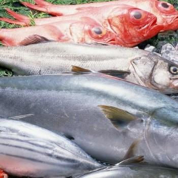 franchise-fish-hunter.jpg