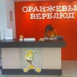 franchise-oranzhevyj-verblyud-1.JPG