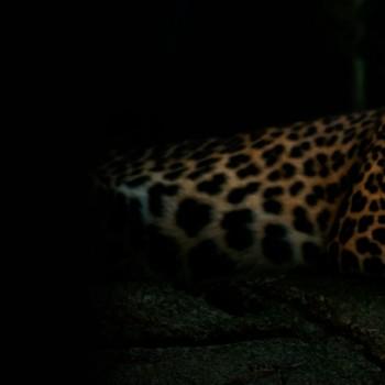 franchise-gepard-telekom.jpg