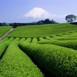 franchise-tea-coffee-garden-1.jpg