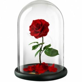 franchise-my-love-rose.jpg